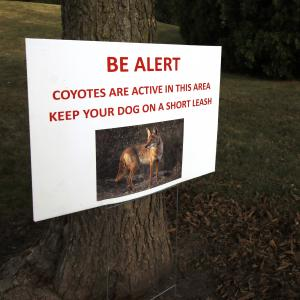 Sign that reads: BE ALERT, Coyotes are active in this area, keep your dog on a short leash