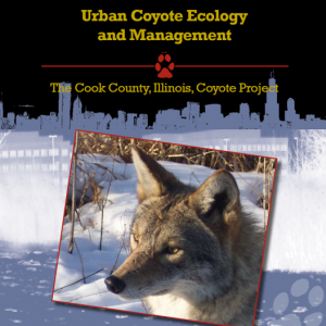 Urban Coyote Ecology and Management
