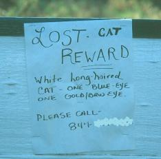 lost cat sign