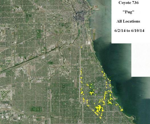 736's locations