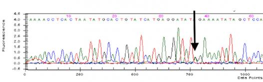 Genetic sequence for coyote 860